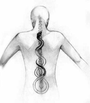 Kundalini rising up the Spinal Column